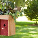 150x150 lci web apr2011 succulent birdhouse