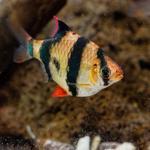 150x150 in my aquarium