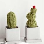 150x150 cactus 170517 0005